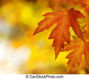 осень, fall.