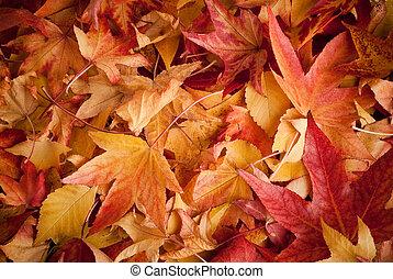 осень, leafs