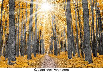 осень, nature., лес