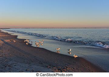 остров, пляж, seagulls, закат солнца, coney