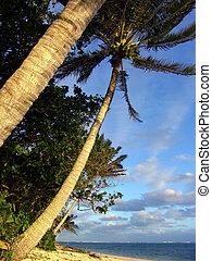пальма, дерево
