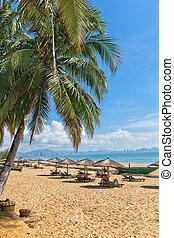 пальма, пляж, море