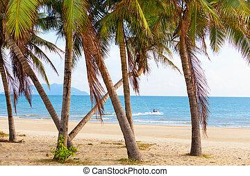 пальма, пляж, пейзаж, море