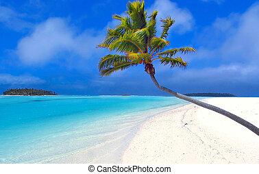 пальма, рай