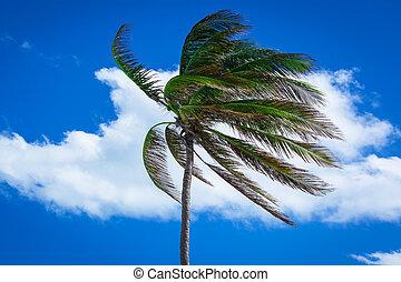 пальма, сильный, дерево, ветер