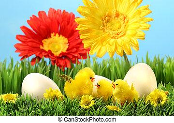 пасха, chicks, трава