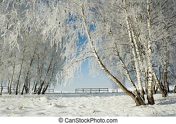 пейзаж, зима, trees