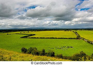 пейзаж, ирландия, крупный рогатый скот