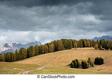 пейзаж, италия, красивая, alpe, ди, осень, сосна, доломит, желтый, trees, тироль, siusi, юг, зеленый