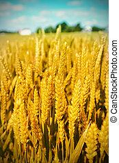 пейзаж, сельское хозяйство
