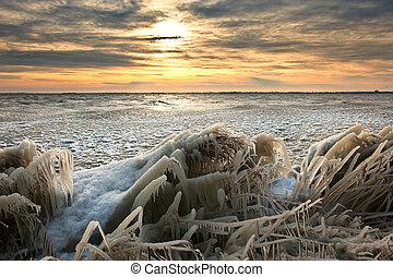 пейзаж, холодно, лед, тростник, восход, зима, covered