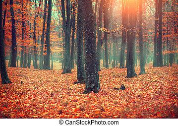 пейзаж, leaves., trees, место действия, осень, падать