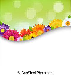 плакат, цветы, красочный, gerbers