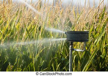 плантация, кукуруза, полив