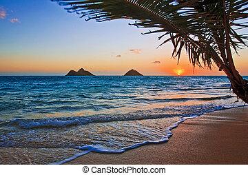 пляж, восход, lanikai, гавайи, тихий океан