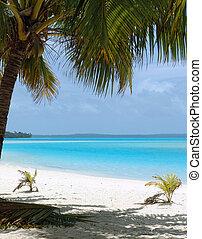 пляж, пальма, дерево