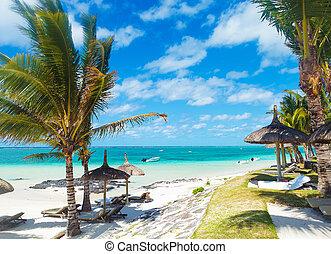 пляж, пальма, скалистый, trees, маврикий, deckchairs