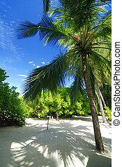 пляж, тропический