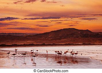 пляж, фламинго, закат солнца