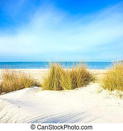 пляж, dunes, небо, океан, песок, белый, трава