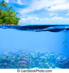 подводный, задний план, поверхность, тропический, воды, море