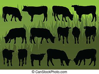 подробный, говядина, корова, иллюстрация, silhouettes, крупный рогатый скот