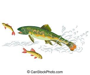 поймать, форель, хищник, рыба, ручей