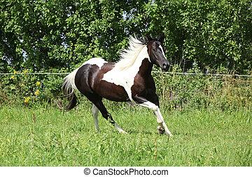 покрасить, лошадь, бег, пастьба