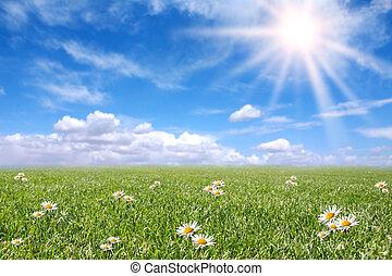 поле, весна, солнечно, безмятежный, луг