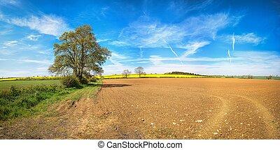 поле, дерево, ploughed