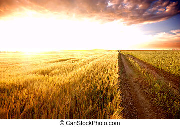 поле, закат солнца