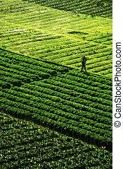 поле, зеленый