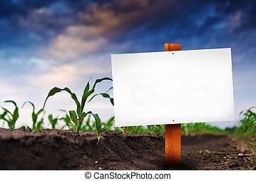 поле, кукуруза, знак, сельскохозяйственное, пустой