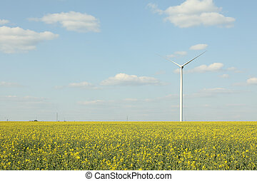 поле, против, windmills, красивая, небо, рапсовое, синий