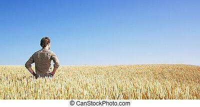 поле, пшеница, молодой, человек