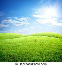 поле, трава, свежий