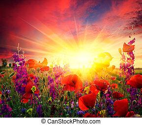 поле, цветение, poppies