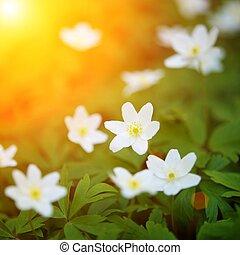поле, цветок