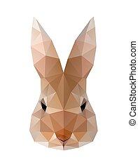 поли, заяц, низкий, кролик, illustration.