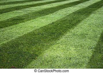 полосатый, газон