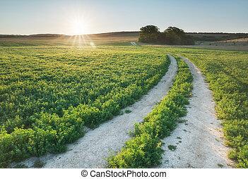 полоса дороги, дорога, синий, небо, morning., глубоко