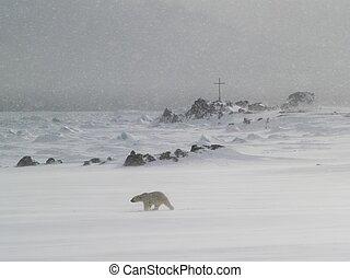 полярный, медведь, снег, метель