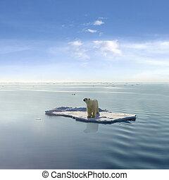 полярный, последний, медведь