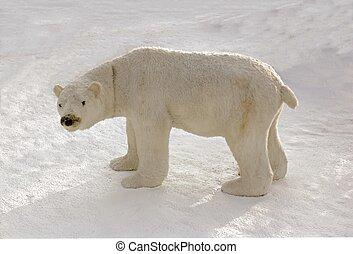полярный, снег, медведь