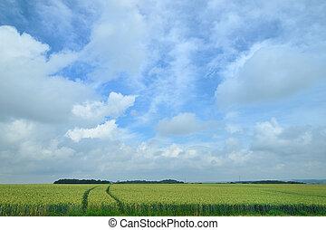 поля, кукуруза, сельское хозяйство