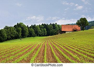 поля, сельское хозяйство