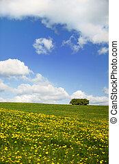 поля, трава, clouds, небо