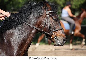 портрет, лошадь, уздечка, бухта