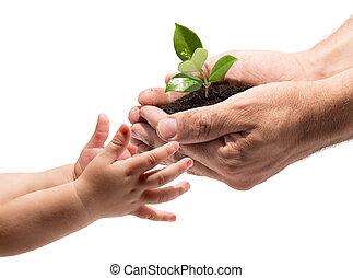 принятие, руки, ребенок, растение