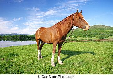 природа, лошадь, молодой